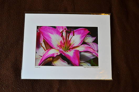 9x12 Matted - Pink Lily by Becky Anders