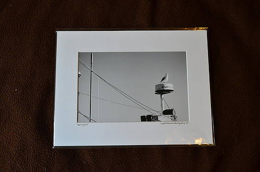 9x12 Matted - Sailing Gull by Becky Anders