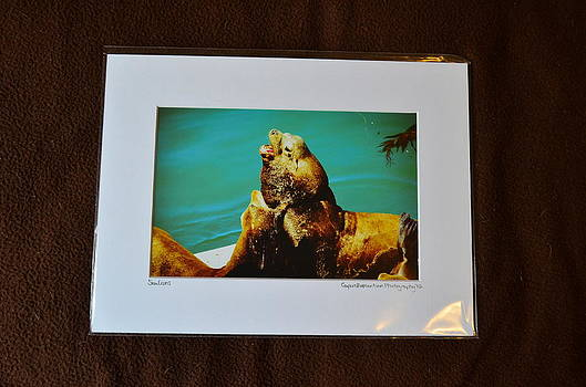 9x12 Matted - Sea Lions by Becky Anders