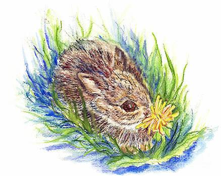 Ellen Miffitt - A Baby Cottontail  Rabbit