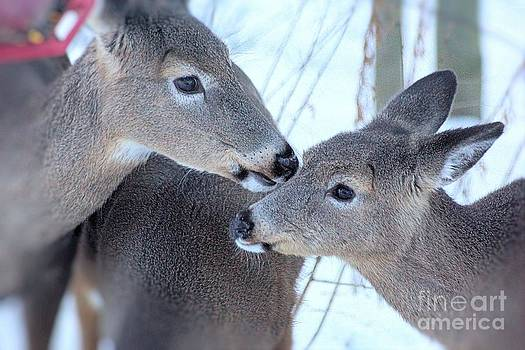 A beautiful connection of the 2 deer by Tabatha Knox