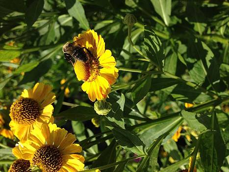 A Bees Favorite by Mac Booey