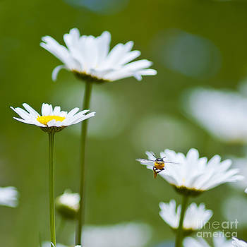 A Bee's World by Beth Riser