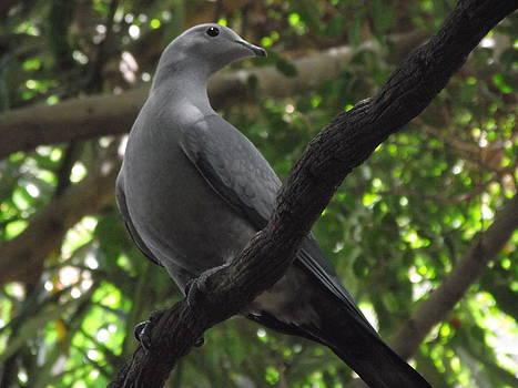 A bird on a branch by Alexander Mandelstam