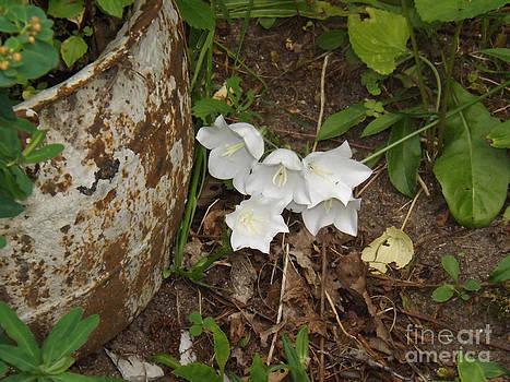 A Bloom in Time by Brenda Brown