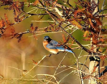 A Bluebirds Regard by Theresa Willingham
