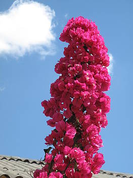 A Bougainvillea Tower In The Sculpture Garden by Frank Chipasula