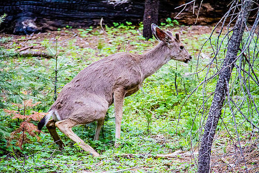 A Buck having to go ?? by Brian Williamson