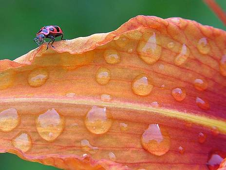 A bugs life by Mario Basinger