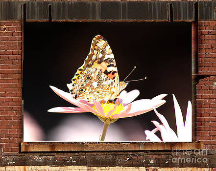 A Butterfly in my Window. by Heinz G Mielke