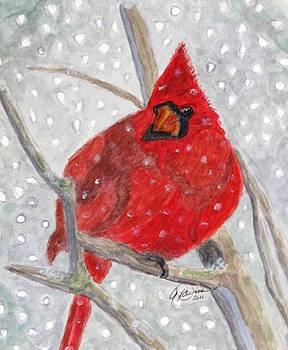 Angela Davies - A Cardinal Winter