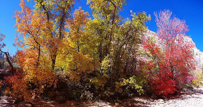 A Change of Color by Bill Zielinski