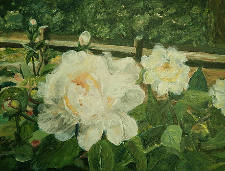 A Concert of Peonies by Carol L Miller