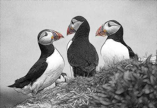 A Contemplation of Puffins by Fiona Messenger