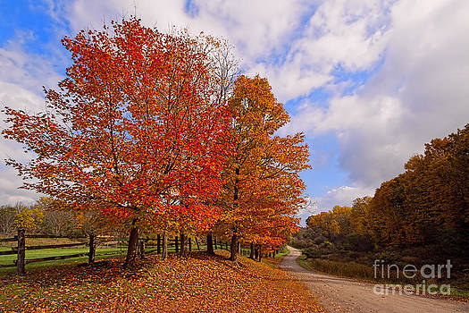 A Country Mile in Autumn by Barbara McMahon