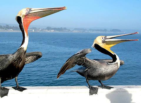 A couple of Happy Pelicans by Danielle Allard