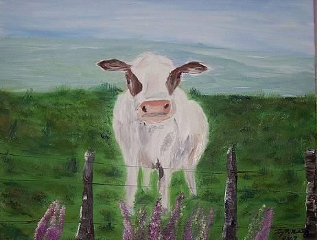 A Cow's Curiosity by Tony  DeMerchant