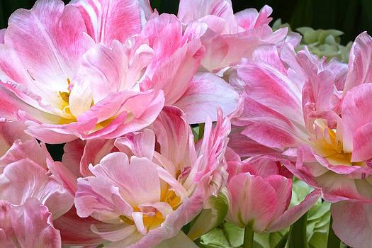 Byron Varvarigos - A Crowd of Tulips