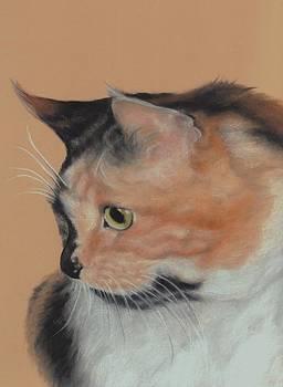 A Curious Cat by Pamela Humbargar