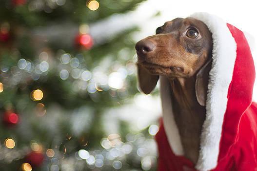 A Dachshund Christmas by Rischa Heape