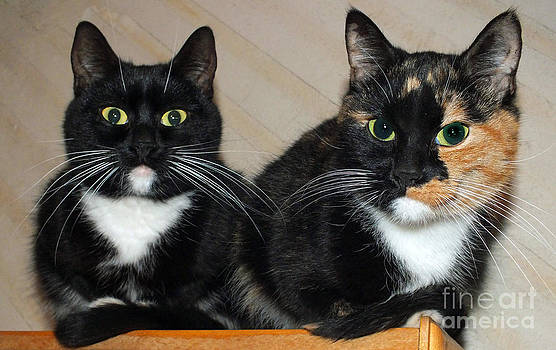 A Daughter and A Mother. A loving Cat Family by Ausra Huntington nee Paulauskaite