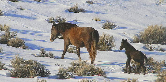 A Day In The Life Of  A Wild Horse  by Jeanne  Bencich-Nations