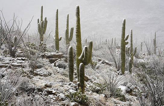 Saija  Lehtonen - A Desert Blizzard