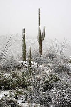 Saija  Lehtonen - A Desert Snow Day