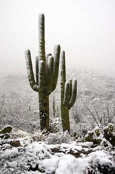 Saija  Lehtonen - A Desert Southwest Snow Day