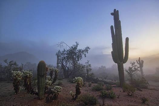 A Desert Surreal by Ryan Seek