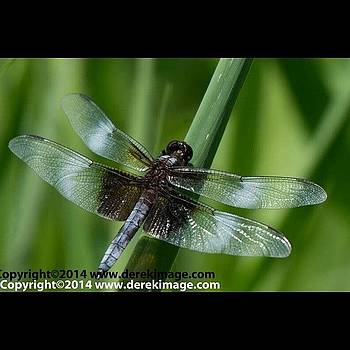 A Dragonfly At Jellystone! by Derek Kouyoumjian