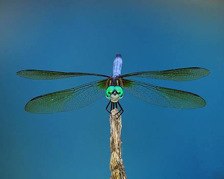 Raymond Salani III - A Dragonfly III