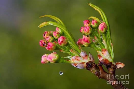 A Drop of Water by Jeremy Hayden