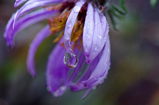 A Droplet of Rain by Eric Dewar