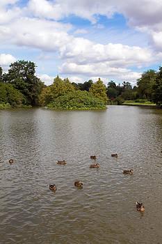 Fizzy Image - A few mallards swim across the lake