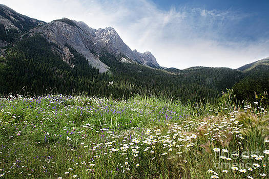Sandra Cunningham - A field of flowers growing in the Rocky Mountains