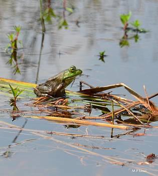 Maria Urso  - A Frog