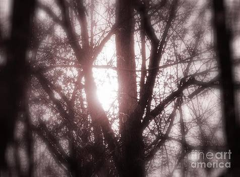 a glimps of Sun by Jackie Bodnar