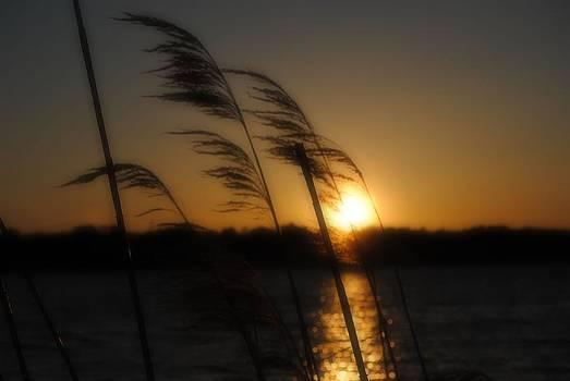 A Golden Evening by Michele Kaiser