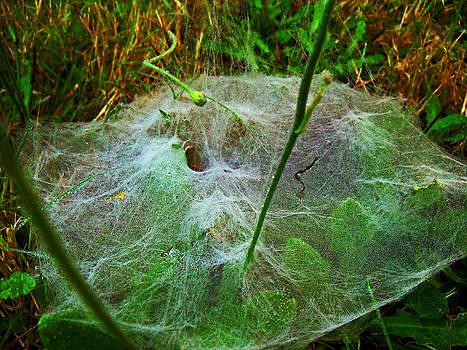 A Grassy Web by Steve Battle