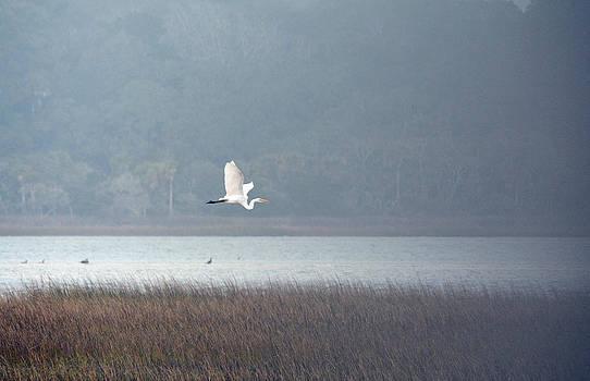A Great Egret by Larry Van Valkenburgh
