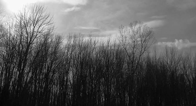 Rhonda Barrett - A Grey Point of View