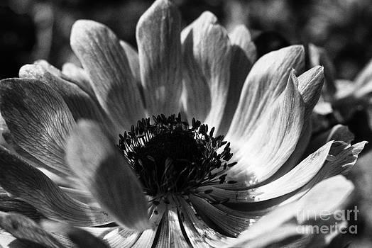 A Happy Flower by Sun Wu