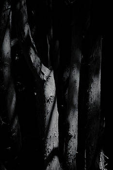 A Hint Of Forest by Odd Jeppesen