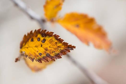 A Leaf by Jakub Sisak