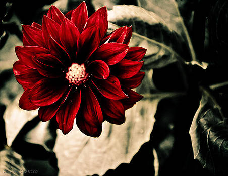 A little red by Cindi Castro
