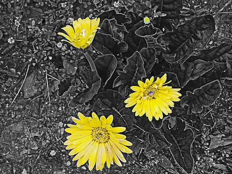 A little Sunshine by Regina McLeroy