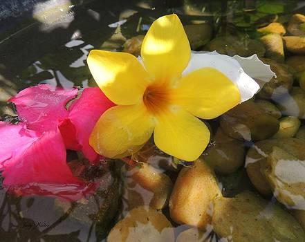A Little Zen by Judy  Waller