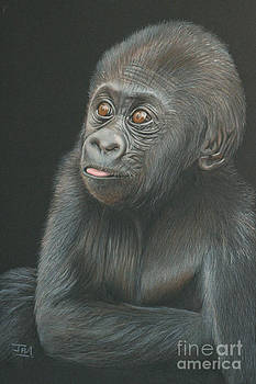 A Look of Wonder - Baby Gorilla by Jill Parry