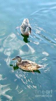 Gail Matthews - A lovely pair of ducks